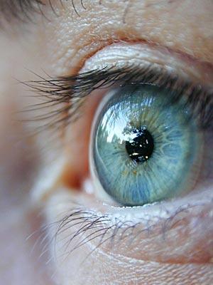 Blue iris reflects