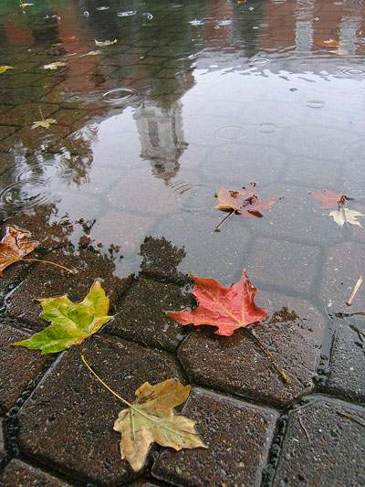 Bentley_rainy_leaves