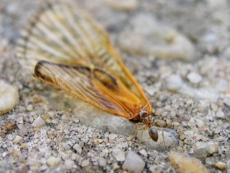 cicada_farewell_1_ant