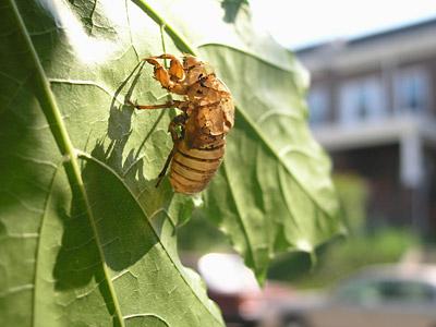 cicada_saturday_2