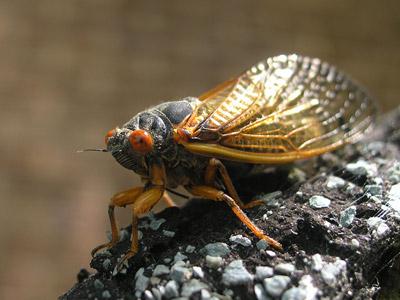 cicada_saturday_3